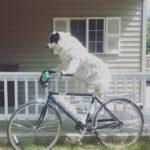 Bike to Mike's